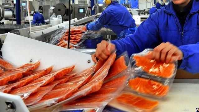 Работа в рыбное фотограф кременчуг